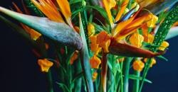 FIORI Blumen-Abos für Büros